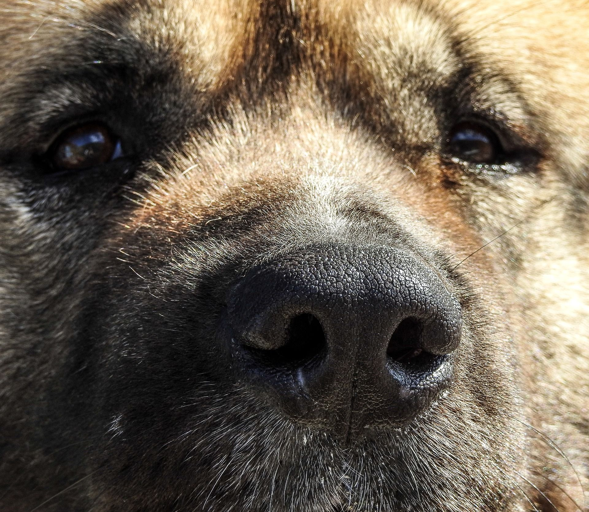 Is your akita driving you crazy within hours stop barking