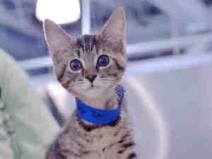 Lilly Is An Adoptable Domestic Short Hair Cat In West Palm Beach Fl Cuddly Kittens Need Several Things To Grow Up To Be Happ Happy Cat Short Hair Cats Cuddly