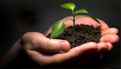 Seeds Sown In Good Soil Sprouting Seeds Seeds Plants