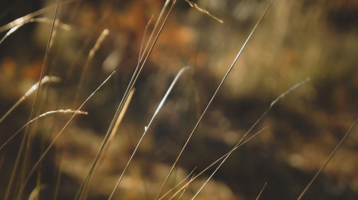 صورة عالية الدقة خالية من العشب الخريف الغابات البرتقال الماكرو عائلة العشب البني أغلق U Photo Plants