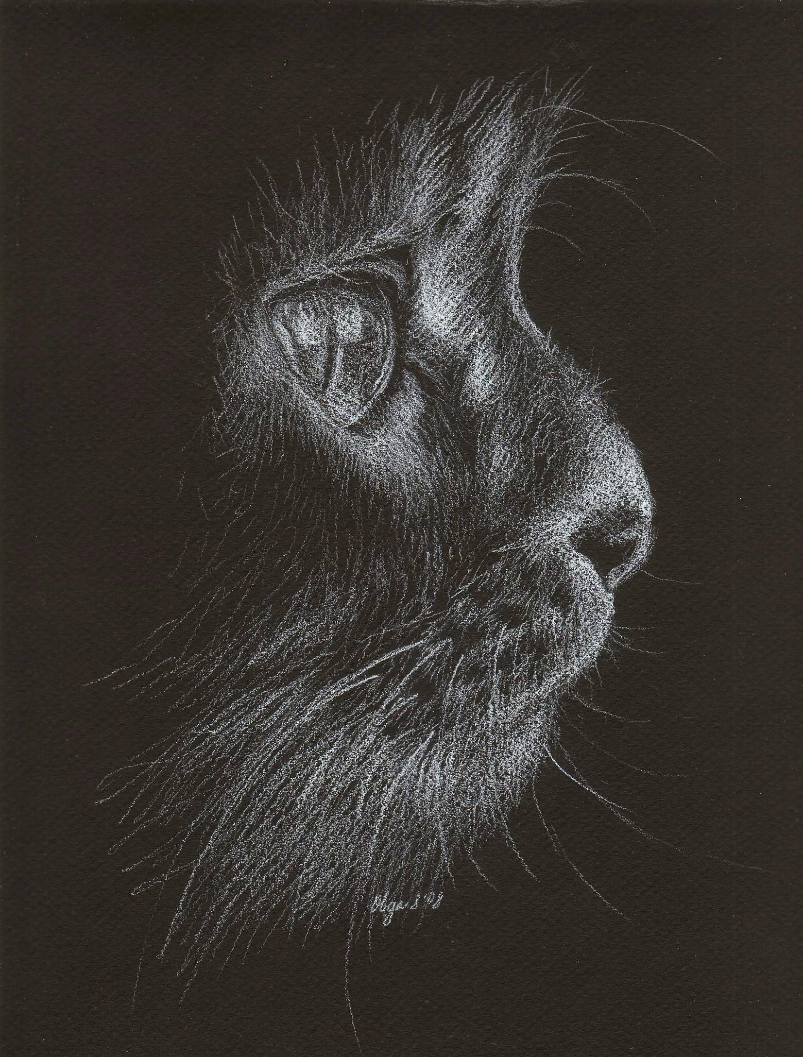 White pencil on black paper sketch oc black paper drawing