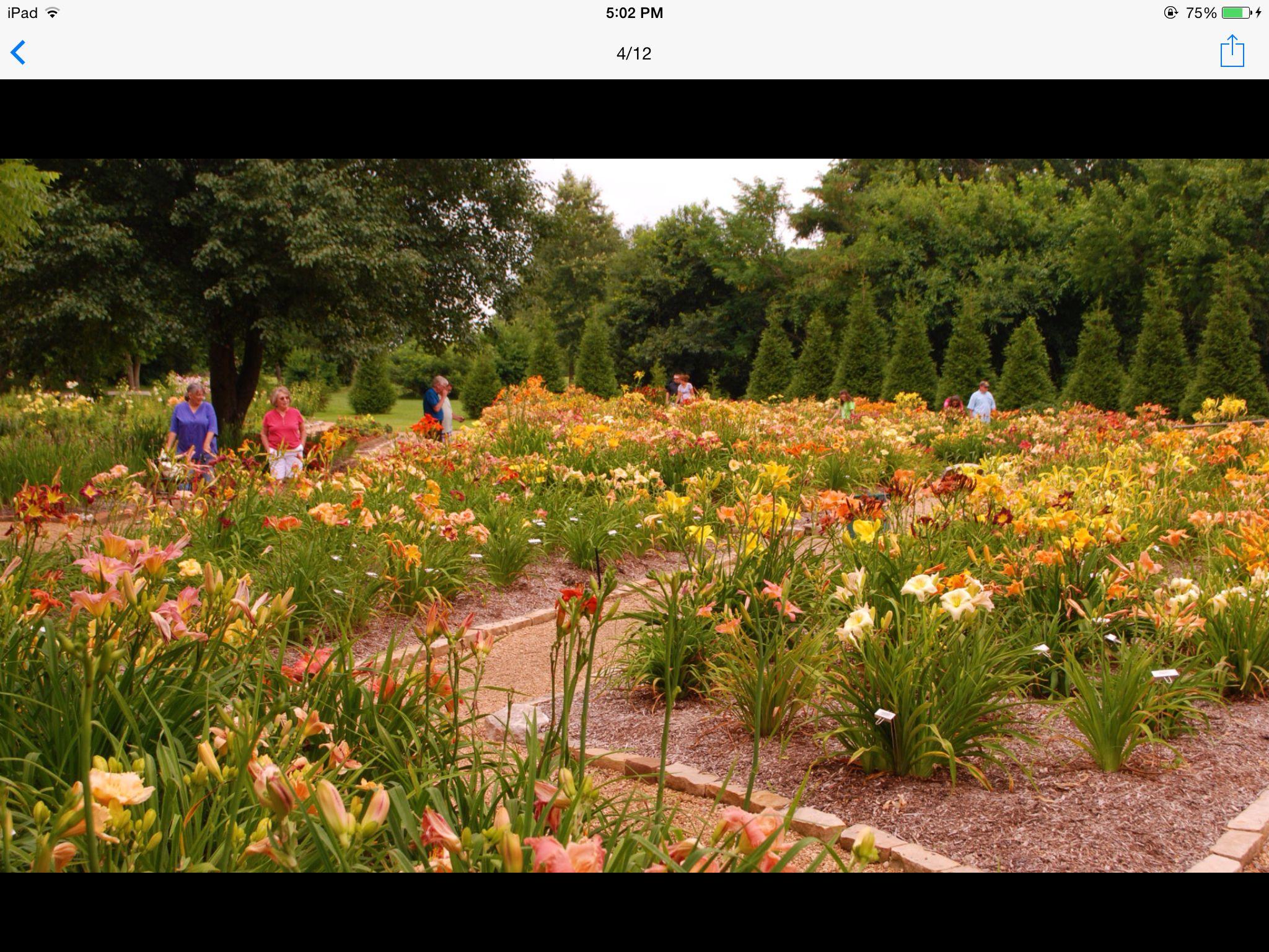 Day lily garden at Nathaniel Greene Park, Springfield, MO   Ozarks ...