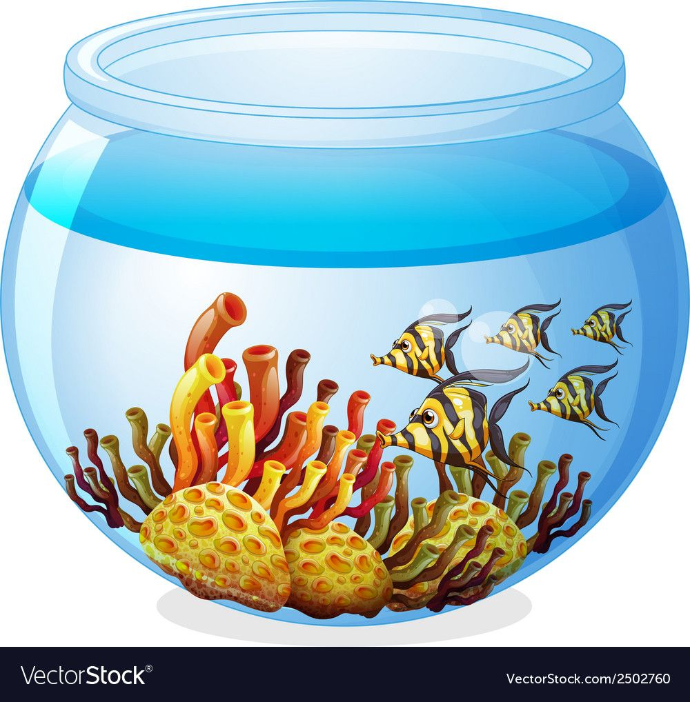 An aquarium with fishes vector image on ภาพ
