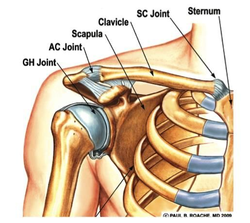 Sore Trapezius fixed with two fingers : Staminist Cycling Forum ...