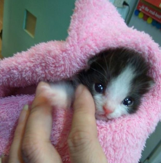 The Smiling Cat 7th September 2015 Baby Cats Kittens Cutest