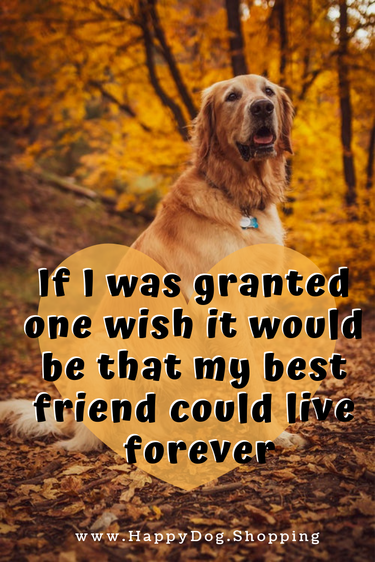 dog quotes love and loyalty happydogshopping animal rescue
