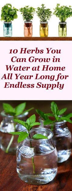 10 Herbs You Can Grow in Water at Home All Year Long for Endless Supply -   16 cute planting Room ideas