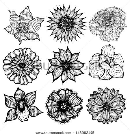 gazania flower drawing black and white - Google Search   Flowers ...