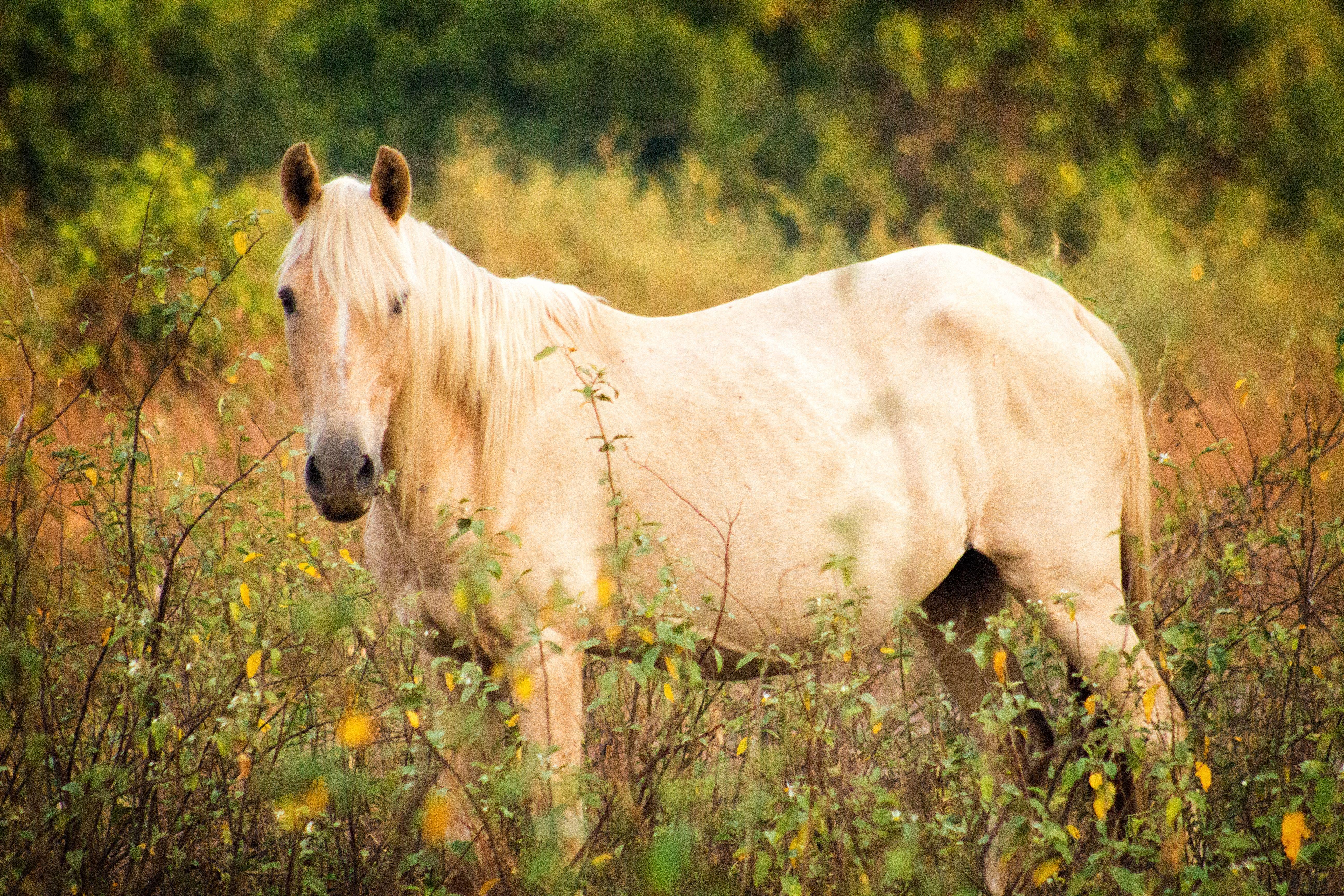 Criollo Aus Bett Buffet Europaletten Hotel Kaufen Kuche Palma Puro In 2020 Lebensmotto Kurz Europaletten Kaufen Pferde Rassen