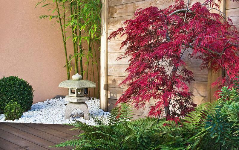 15 best trees for small gardens: Beautiful small trees #smalljapanesegarden