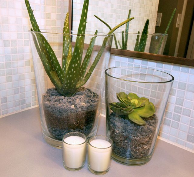 bathroom friendly planting succulent aloe vera rocks