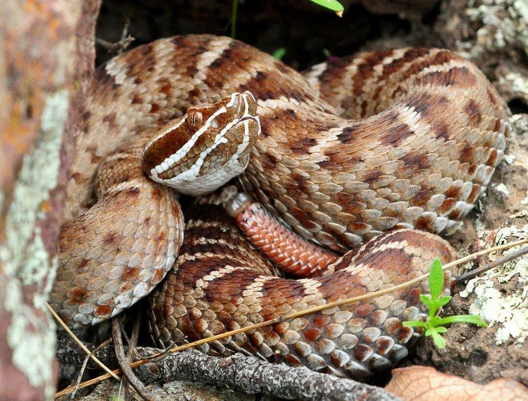 Pin by richard de la cruz on reptiles 5 reptiles and