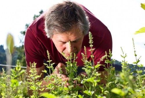 Confira sete dicas que a Dona Flor Nutrientes para Plantas fez especialmente para plantar e cuidar de um jardim de ervas aromáticas.