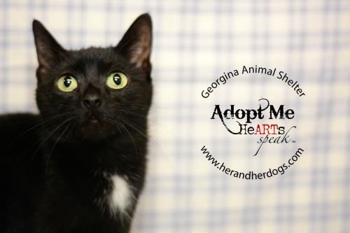 I Found Velvet Petsmart Aurora On With Images Kitten Adoption Pets Animal Shelter