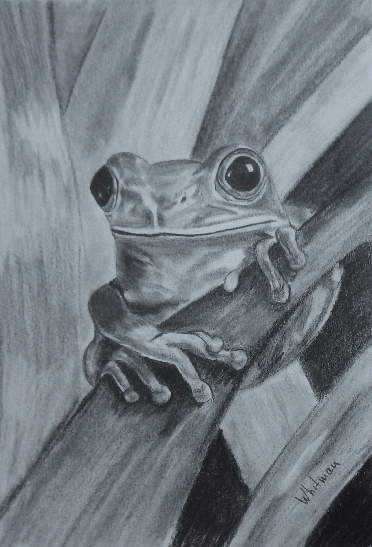 Tree Frog Sketch Original Art Graphite Pencil Drawing By Elena