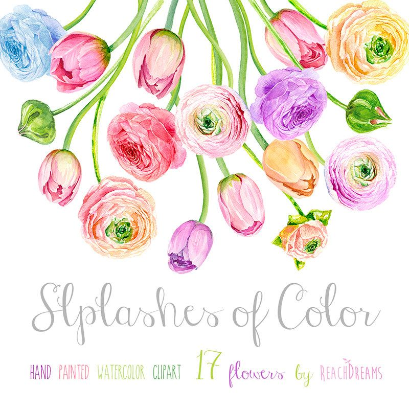 Bouquet Ranunculus and Tulips. Hand Drawn Clip Art Watercolor ...