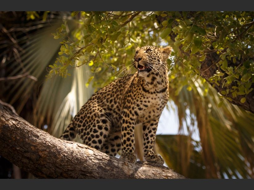 Les superbes photos de voyage du concours National Geographic