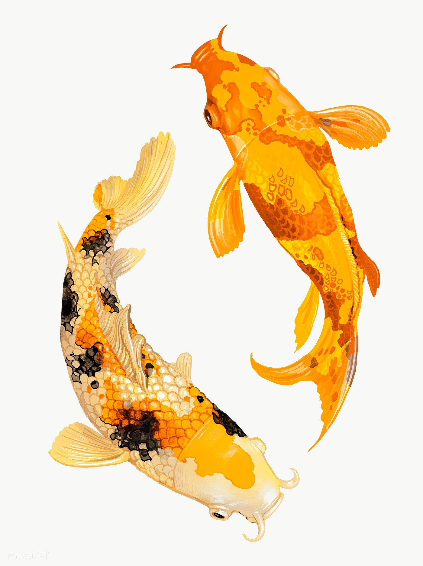 Two Japanese Koi Fish Swimming Transparent Png Premium Image By Rawpixel Com Techi Japanese Koi Koi Watercolor Japanese Koi Fish Tattoo