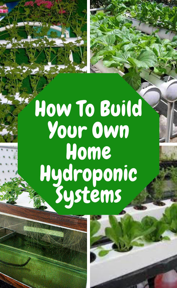 Home Hydroponics  A Useful Techniquehome