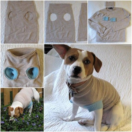 Upcycle Sweater into Pet Clothes