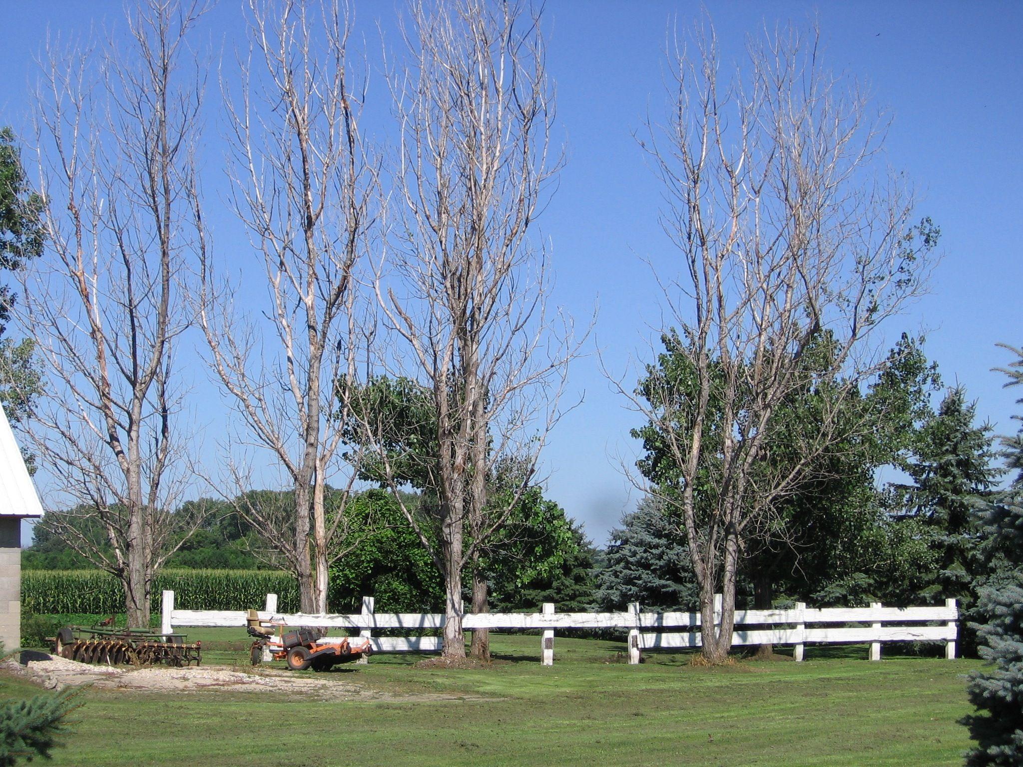 Wireless Kills Trees