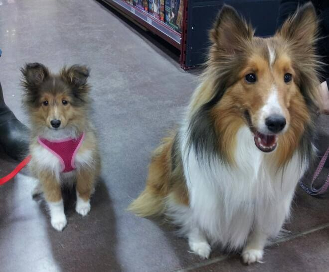 These two sweethearts visited the Global Pet Foods stores in Stellarton (New Glasgow), Nova Scotia and brightened up our day!  ~ February 26, 2014