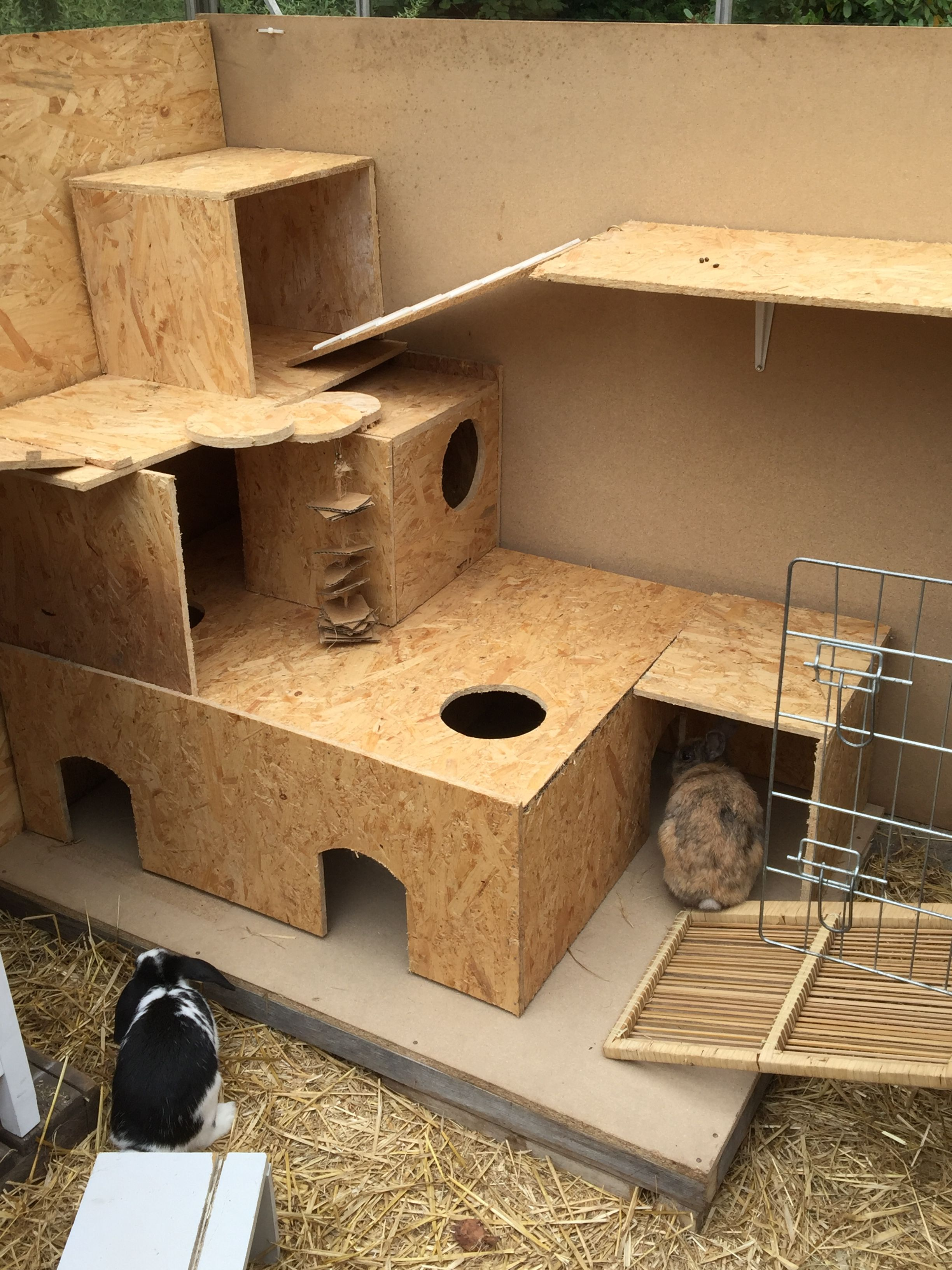 Had to put a plate under this one rabbit keeped on - Casa conejo ...