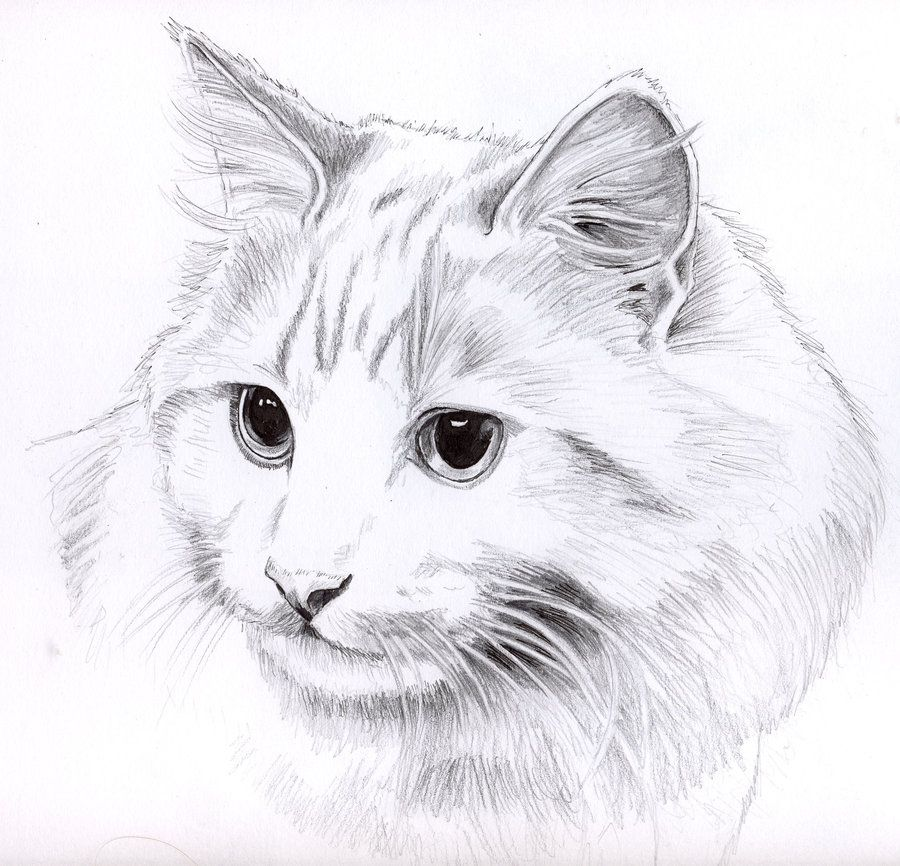 Pin by Karen Thompson on Sketches and art Cat sketch