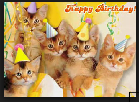 Happy Birthday Cat Images Cats Friend Kitten