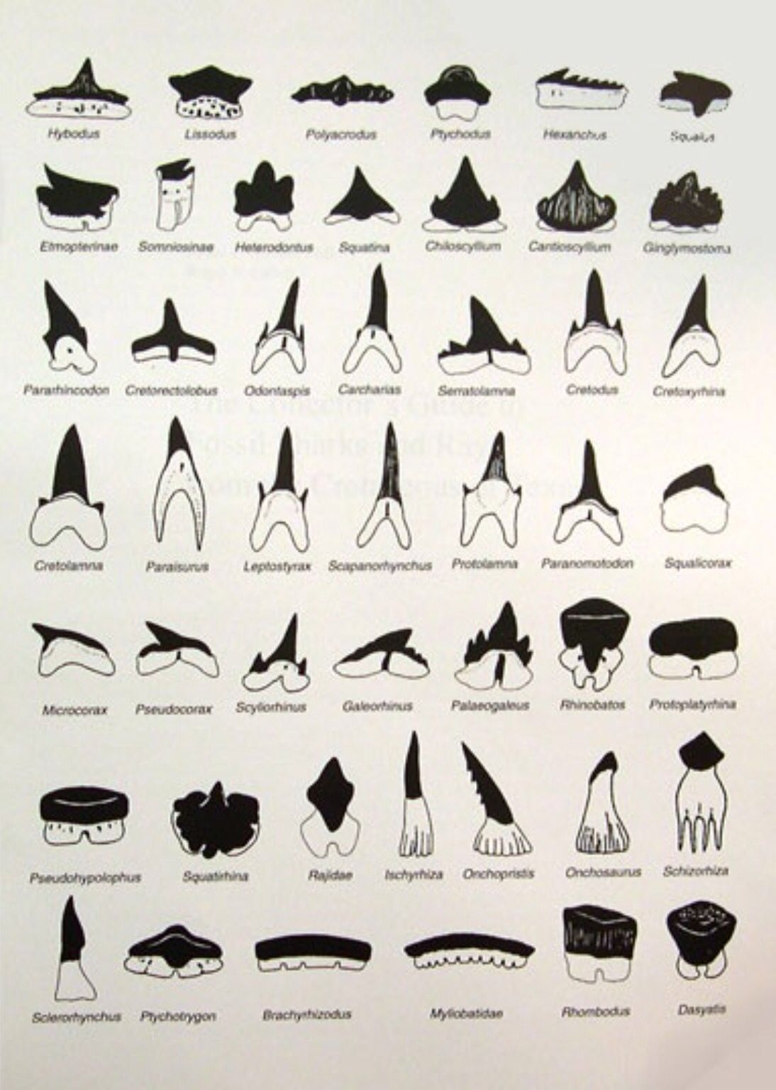Types Of Sharks A Mammal Or Fish About Facts And Other