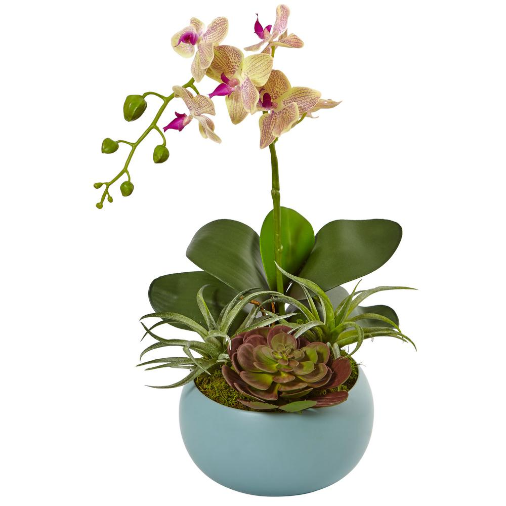 Nearly Natural Indoor Phalaenopsis Orchid And Succulents Artificial Arrangement In Decorative Vase Phalaenopsis Orchid Orchid Arrangements Orchids