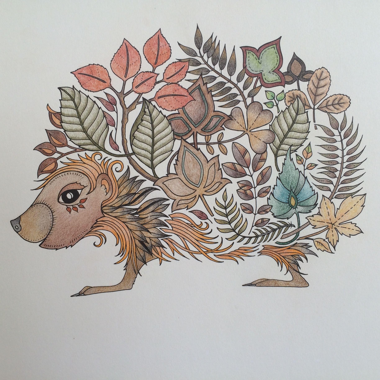 Enchantedforest Hedgehog Johannabasford Johanna Basford Coloring Book Basford Coloring Book Johanna Basford Coloring