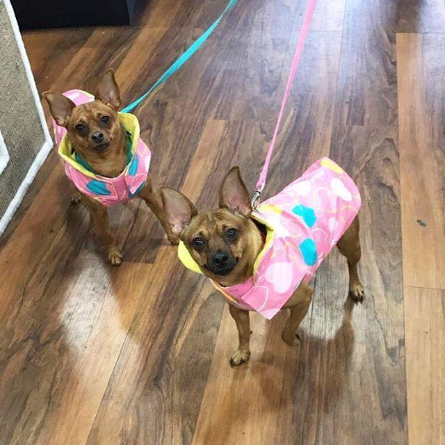 Cutecustomeralert Visla And Envy Stopped By Pet Valu Olney Md To Pick Up Their New Rain Slicker From Bailey Bella Pet Valu Pets Rain Slicker Animals