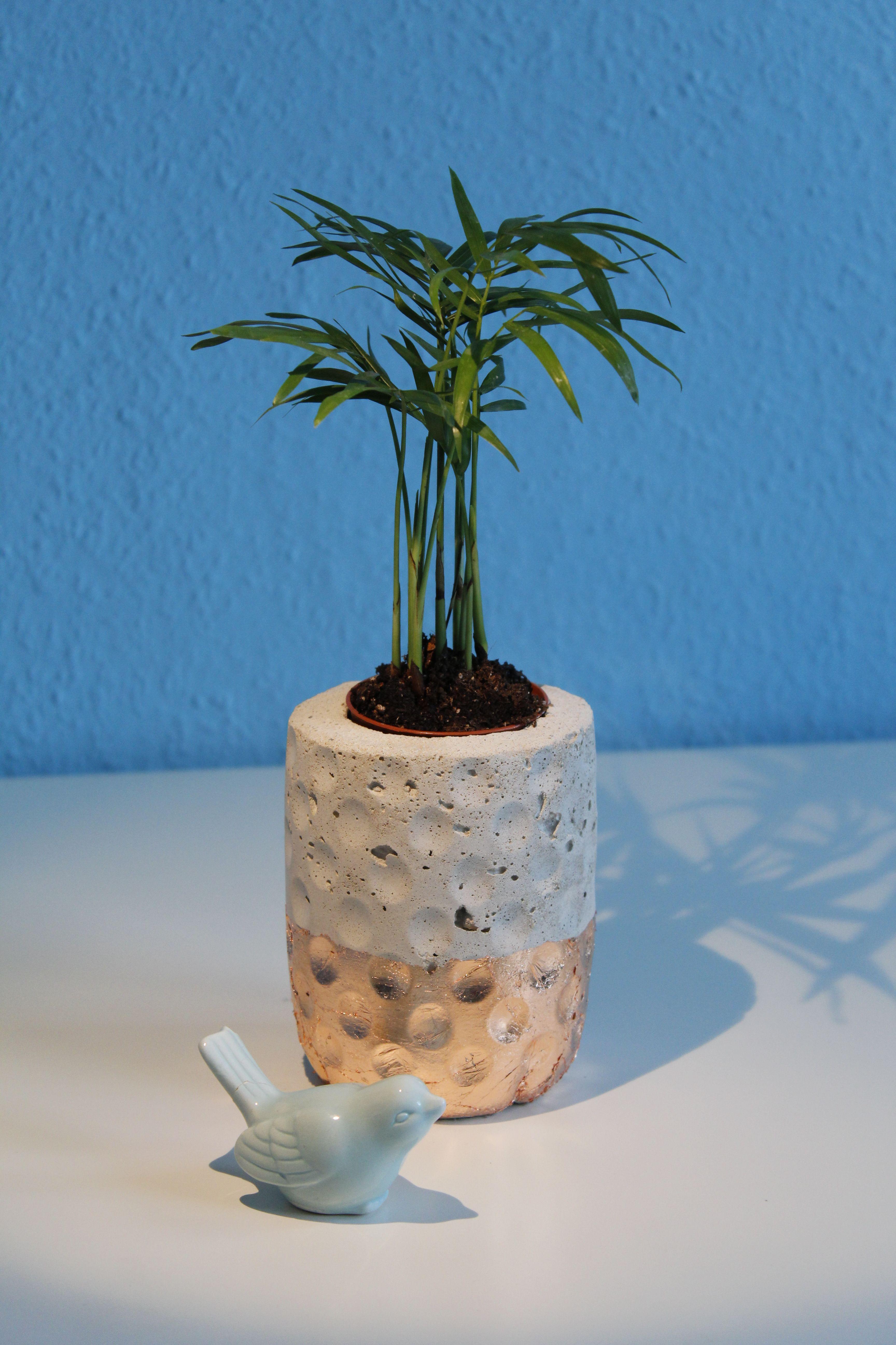 DIY] Beton-Blumentopf aus Granini-Flasche   Flaschen, Wunderschön ...
