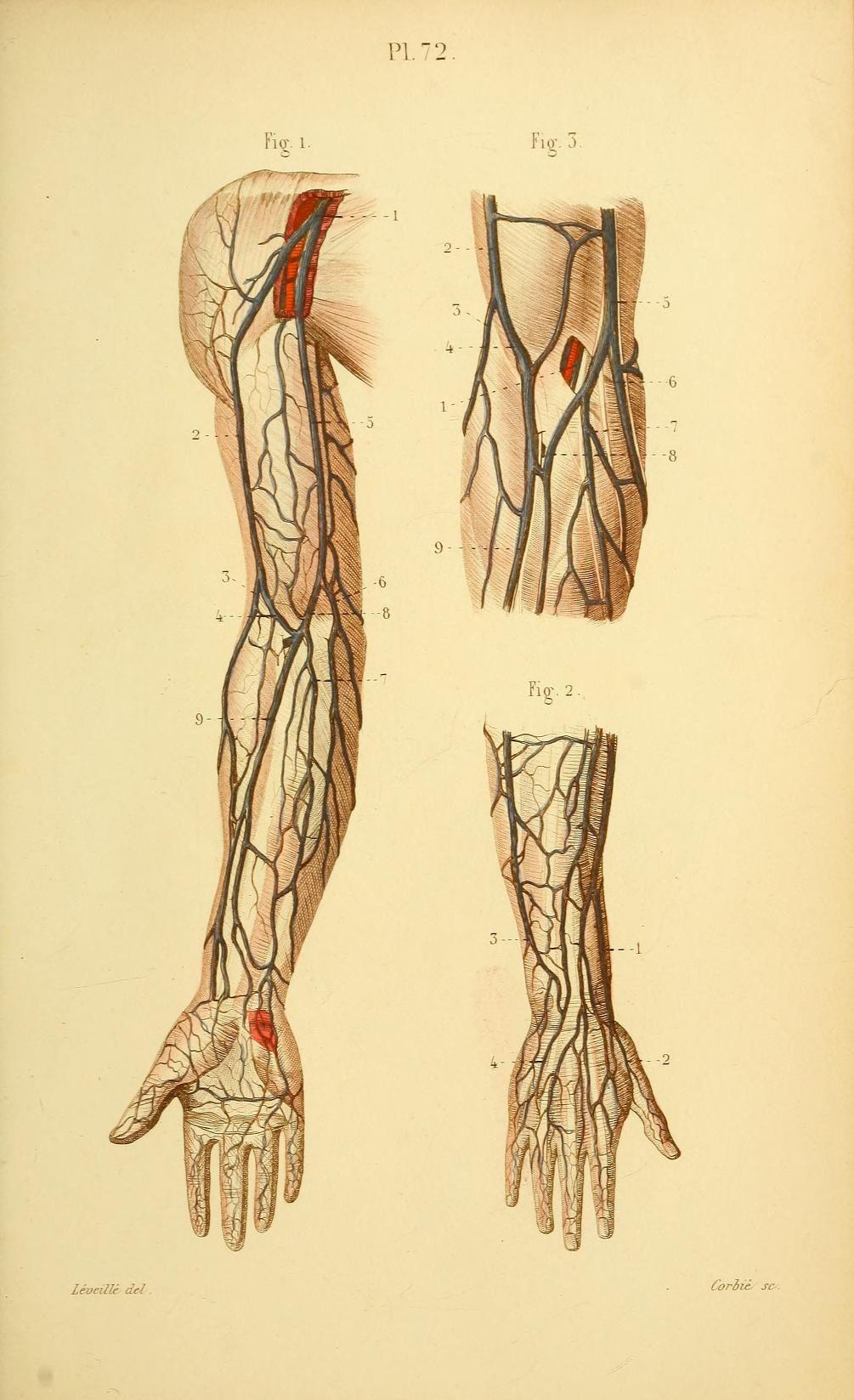 Small Full Descriptive Anatomy Atlas Of The C Human Anatomy