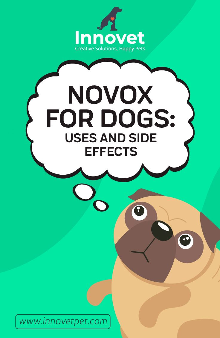 Novox For Dogs Innovet Pet Articles Dogs Hip Dysplasia