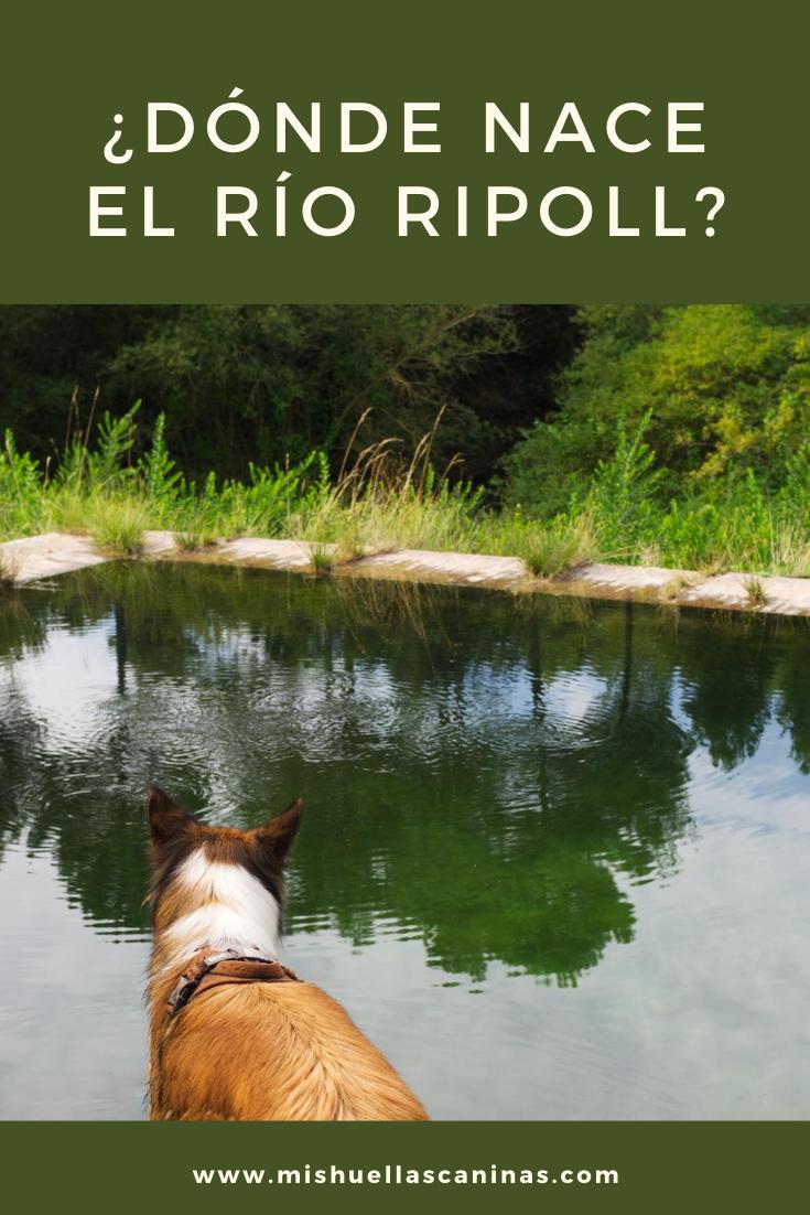 Dónde Nace El Río Ripoll Rutas Saltos De Agua Piscinas Naturales