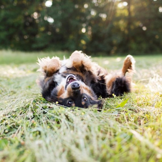 How To Snap The Perfect Pet Photo Martha Stewart Animal Photography Dogs Animal Photography Dog Photoshoot