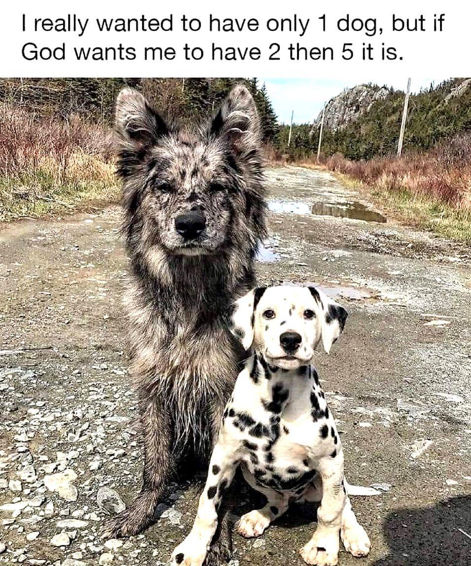 Bahahahaha Dog Memes So Funny Dog Meme Lisp Family Dogs Breeds Tiny Dog Breeds Dog Breeds Little