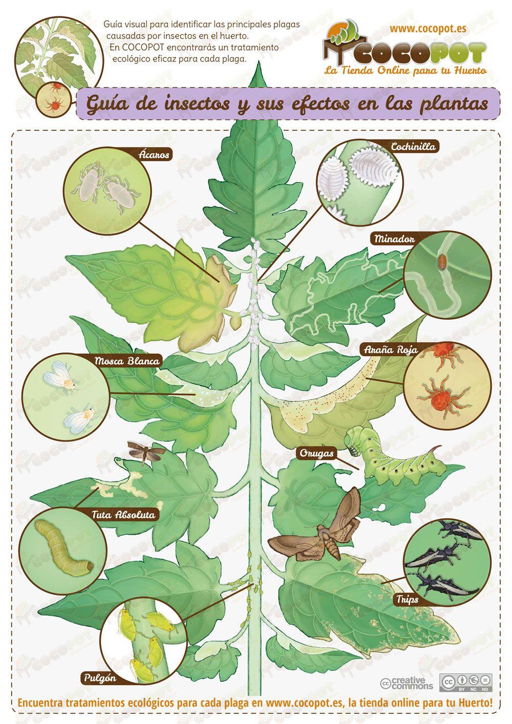 Gu a visual para reconocer y detectar las principales - Plantas para ahuyentar insectos ...