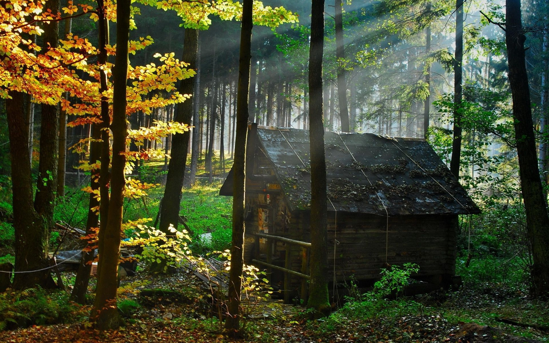 """Small house in the Woods The """" away"""" Pinterest"""