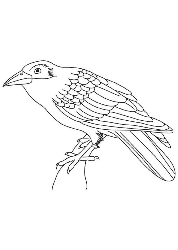 Cuckoo Bird Coloring Page