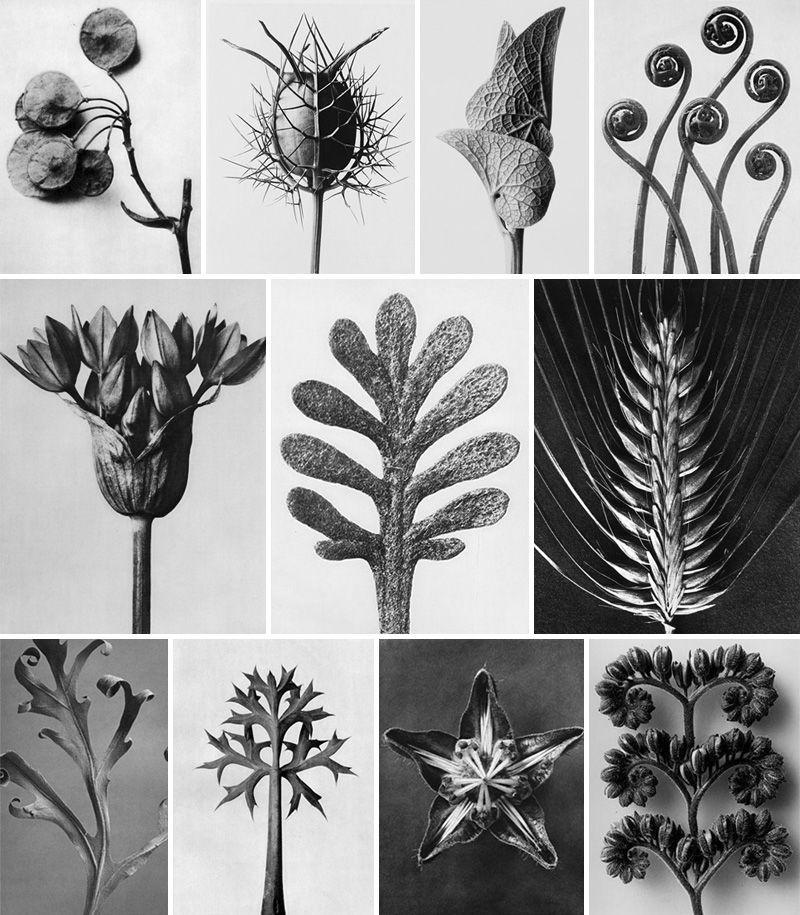 Biologia e arte: il disegno naturalistico
