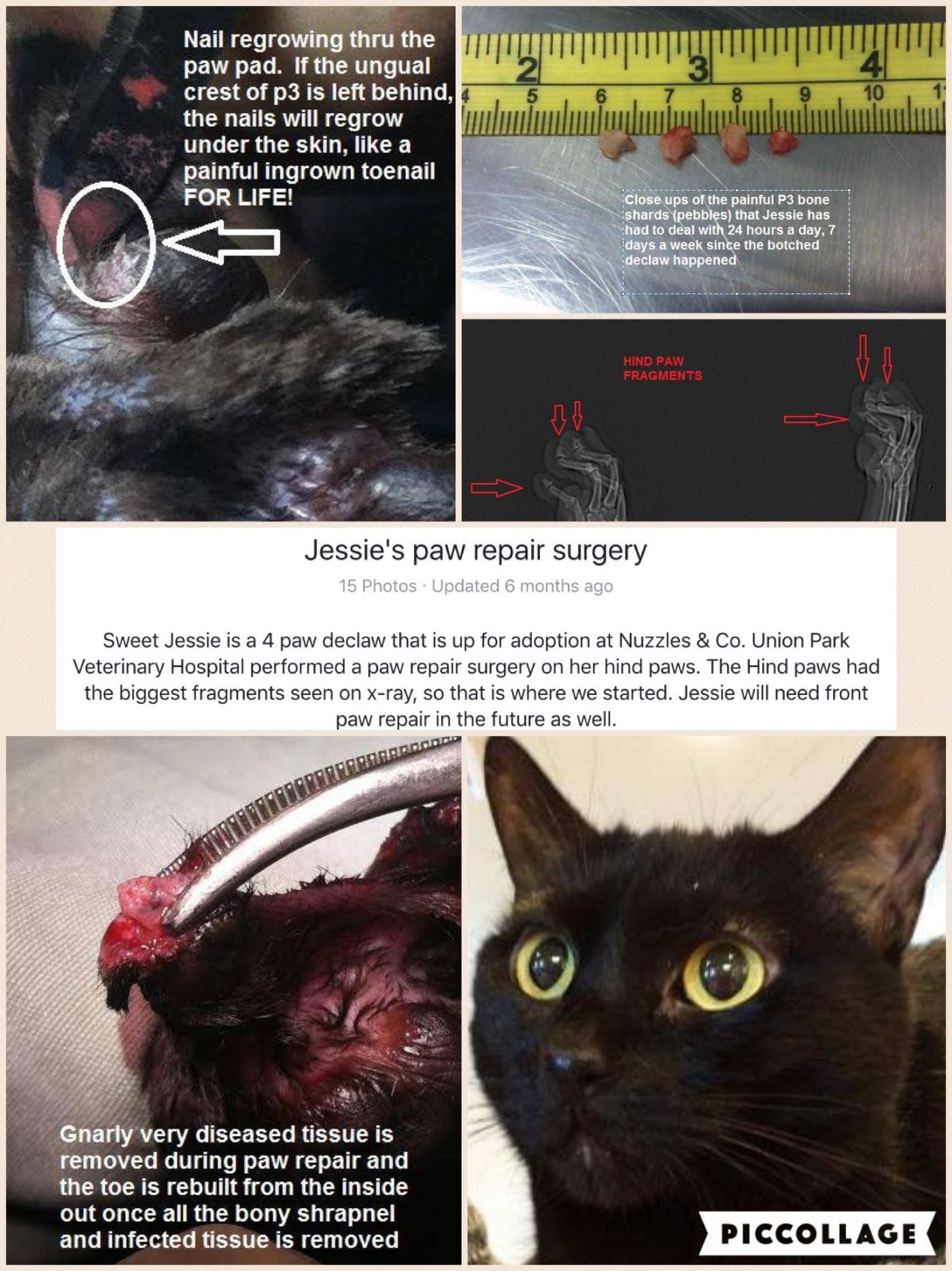 The Following Do Not Want To Document Declaw Re Surgeries Because They Are Greedy Animal Abusers Avma2017 Avmameets Catvets Vet Student Vet Med Vet School