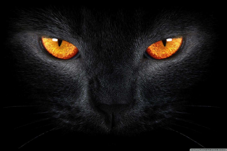 Download Black Cat Hd Wallpaper Svarta Katter Galna Katter