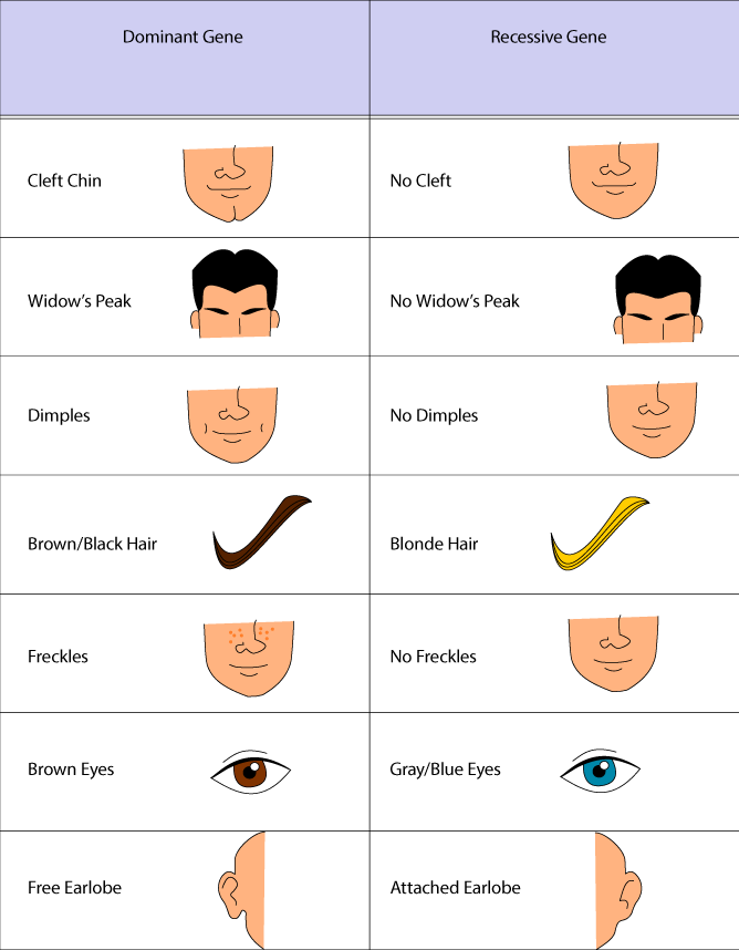 Worksheets. Dominant And Recessive Traits Worksheet ...