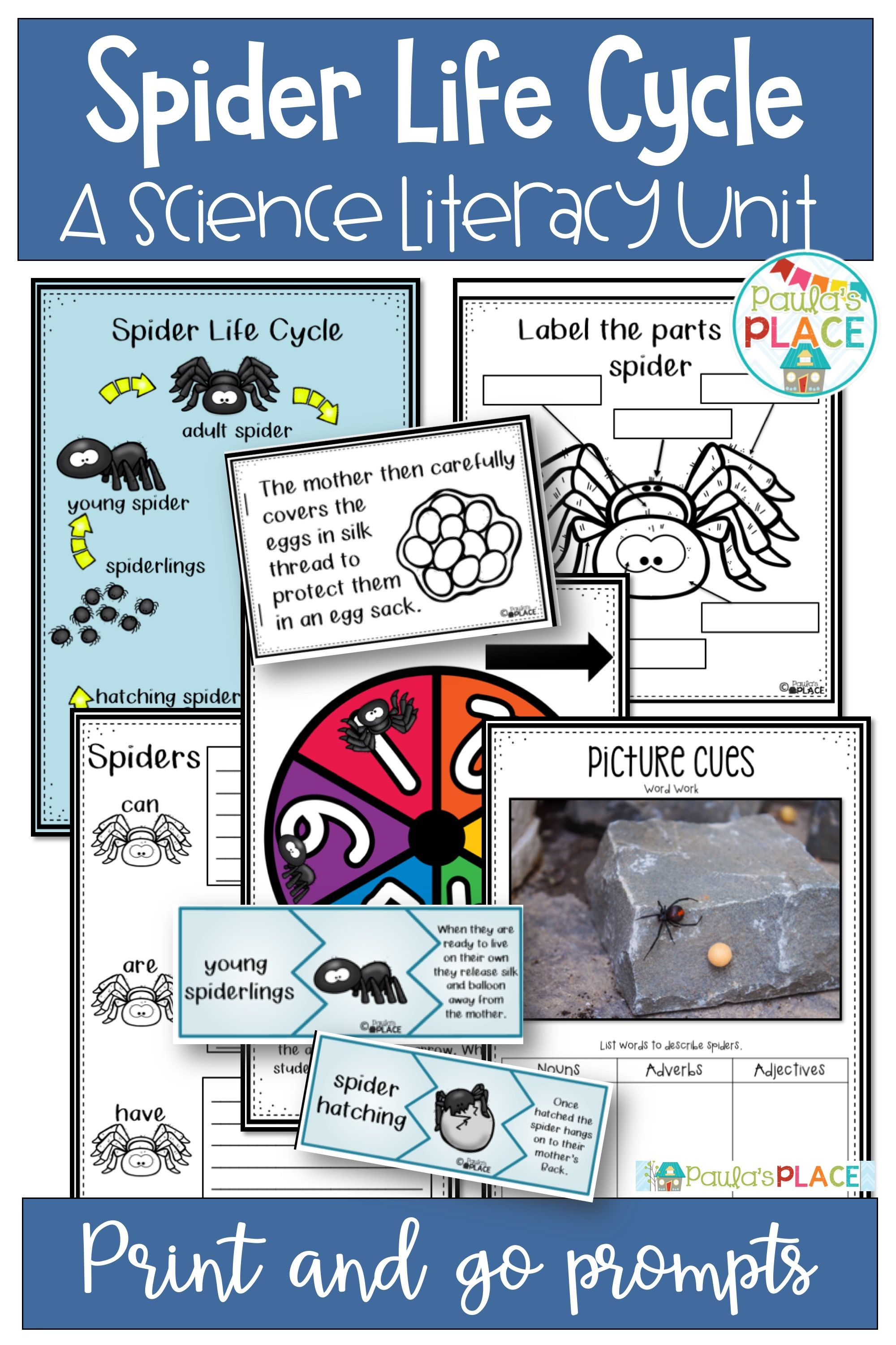 Spider Life Cycle Activities And Worksheets