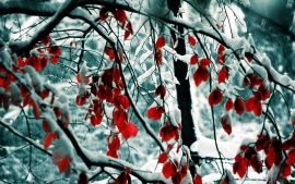 WALLPAPERS HD: Snow Leaves