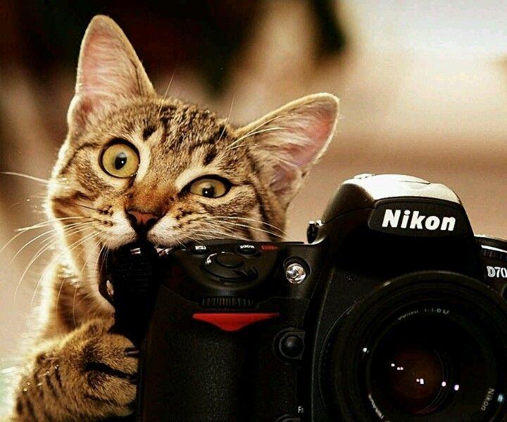 Miren la cámara!!!...sí tuviera dedos sería más fácil...