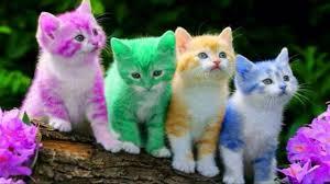 تفسير رؤية حلم القطط الملونة في المنام للعصيمي In 2020 Kittens Cutest Animals Funny Cats Cat Facts